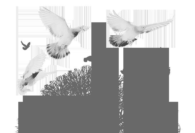 video-passo-della-palomba