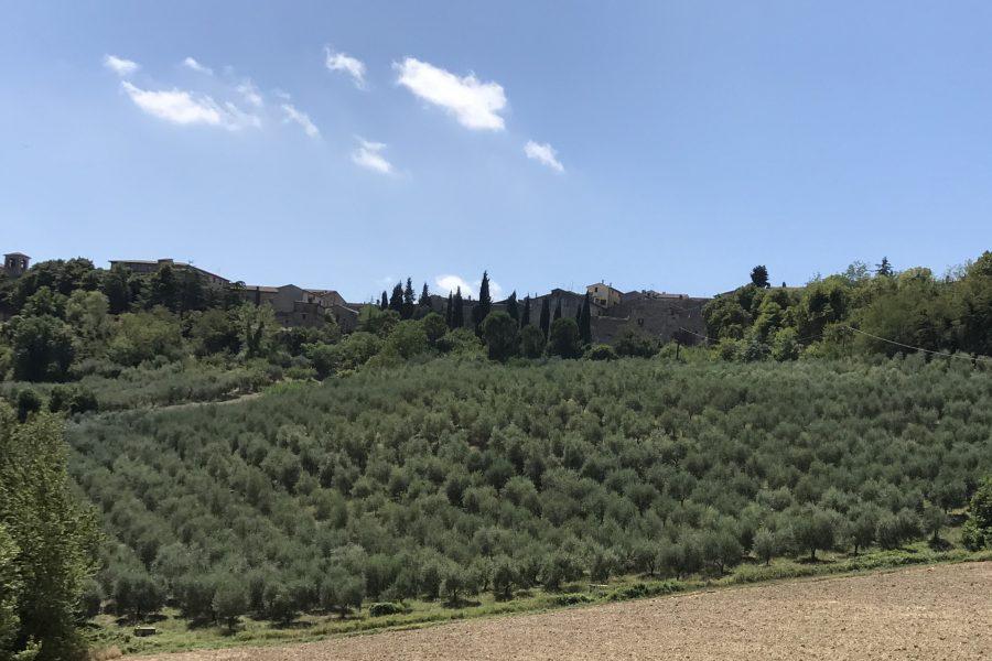 Environmental Footprint: L'olio d'oliva fa bene anche all'ambiente!!!!